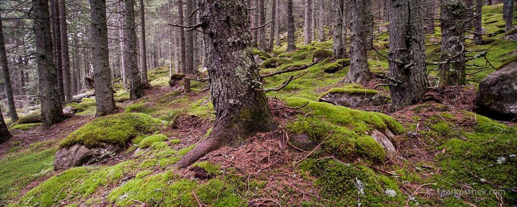 Stanisoara-Tal, Retezat National Park - Südkarpaten - Rumänien, Ein lohnendes Ziel für Fotografen, die sich den Naturlandschaften widmen.