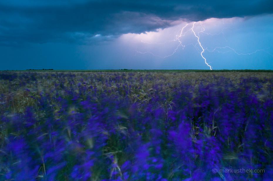 Tolle Landschaften gibt es auch im Südosten von Rumänien an der bulgarischen Grenze wie diese Blumenwiese im Gewitter.