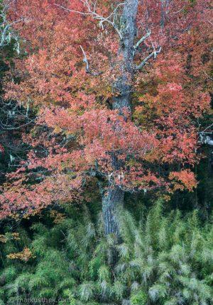 Buntes Herbstlaub in Nordpatagonien