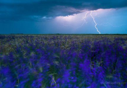 Eine Blumenwiese im Gewitter - Südost-Rumänien